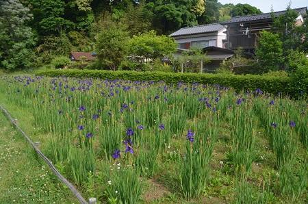 20170521佐倉城址公園06