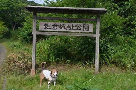 20170521佐倉城址公園04