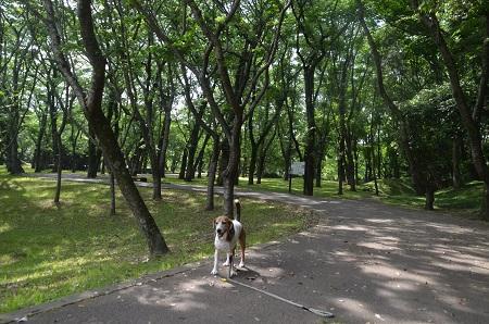 20170521佐倉城址公園42