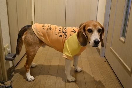 20170522犬服9930