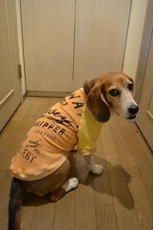 20170522犬服9932