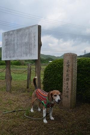 20170527三増合戦場06