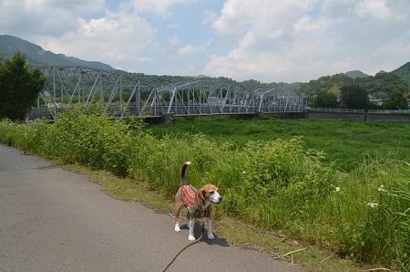 20170527平山橋04