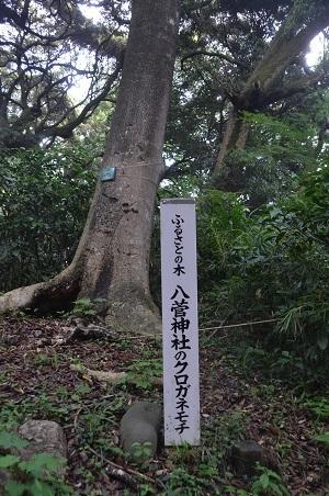 20170527八菅神社15