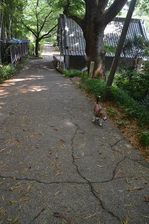 20170527神奈川の八菅神社02