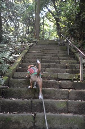 20170527神奈川の八菅神社10