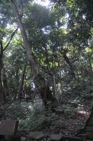 20170527神奈川の八菅神社09