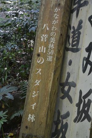 20170527神奈川の八菅神社07