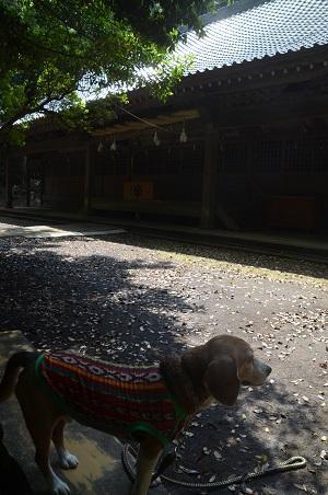 20170527神奈川の八菅神社14