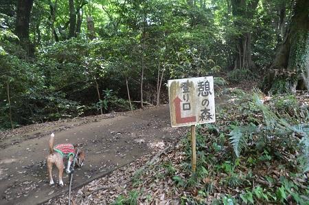 20170527八管山憩の森01
