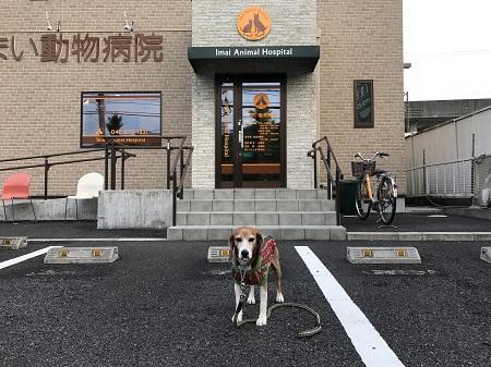 20170527 びいすけ病院02