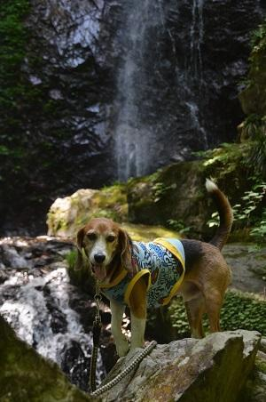 20170531 払沢の滝11