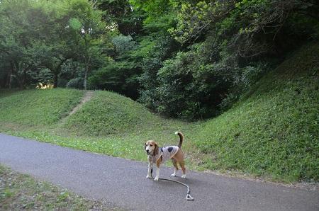 20170605佐倉城址公園23