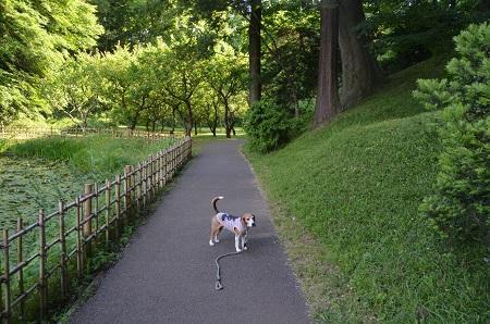 20170605佐倉城址公園22