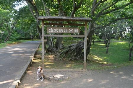 20170605佐倉城址公園33