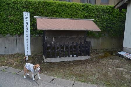 20170615櫻井城址05