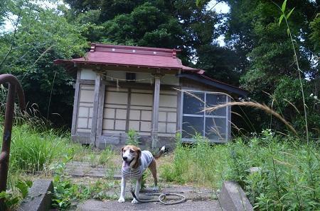 20170615櫻井城址11