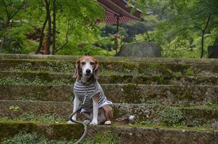 20170615龍福寺と不動滝03