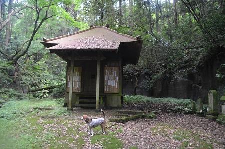 20170615龍福時の森06