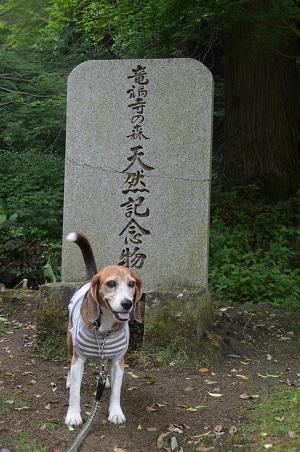 20170615龍福時の森01