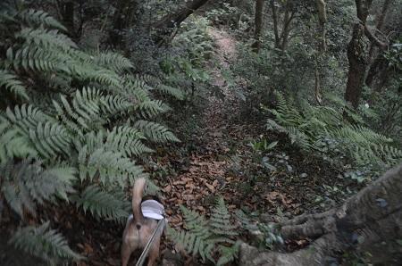 20170615龍福時の森12