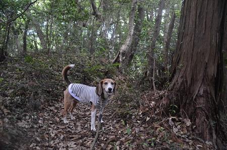20170615龍福時の森17