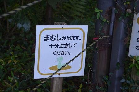 20170615龍福時の森15