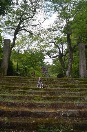 20170615龍福時の森19
