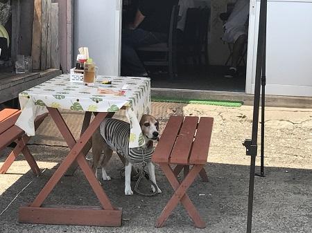 20170615犬若食堂03