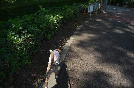 20170616佐倉城址公園の菖蒲02