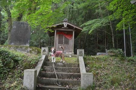 20170626白井不動の滝14