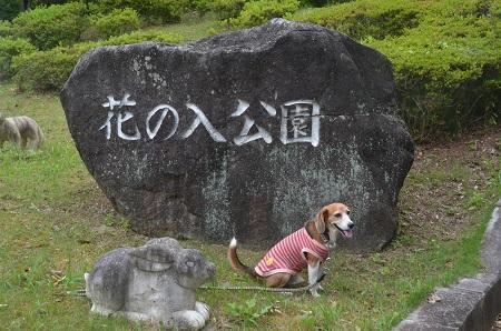 20170626花の入公園01
