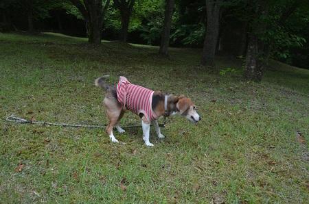 20170626花の入公園17