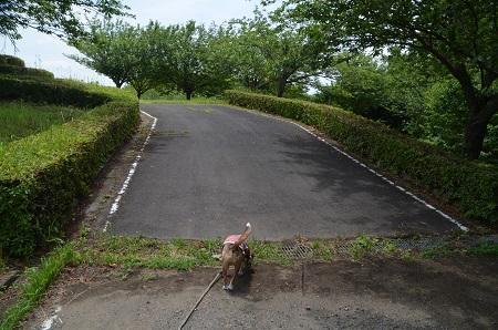 20170226富谷山ふれあい公園03