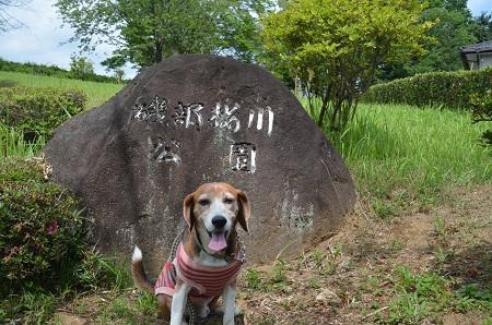 20170626 名勝 桜川01
