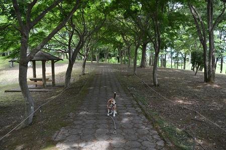 20170626 名勝 桜川14