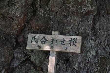 20170720楢原小学校豊成分校10