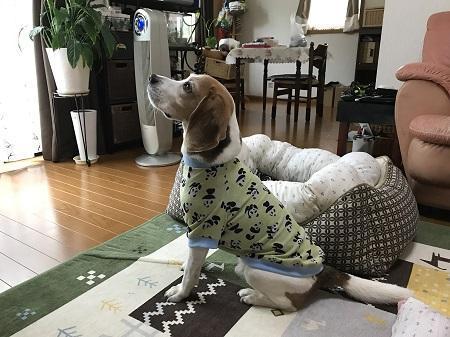 20170810犬服11031