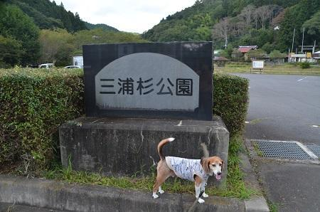 20170914三浦杉公園01