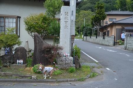 0170914鷲尾山と三浦杉17