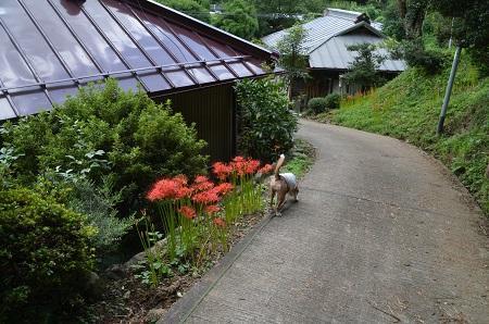 0170914鷲尾山と三浦杉16
