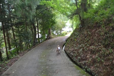 0170914鷲尾山と三浦杉15