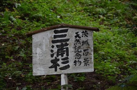 0170914鷲尾山と三浦杉13
