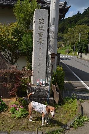 0170914鷲尾山と三浦杉19