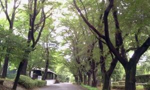 maruyama7gatu5.jpg