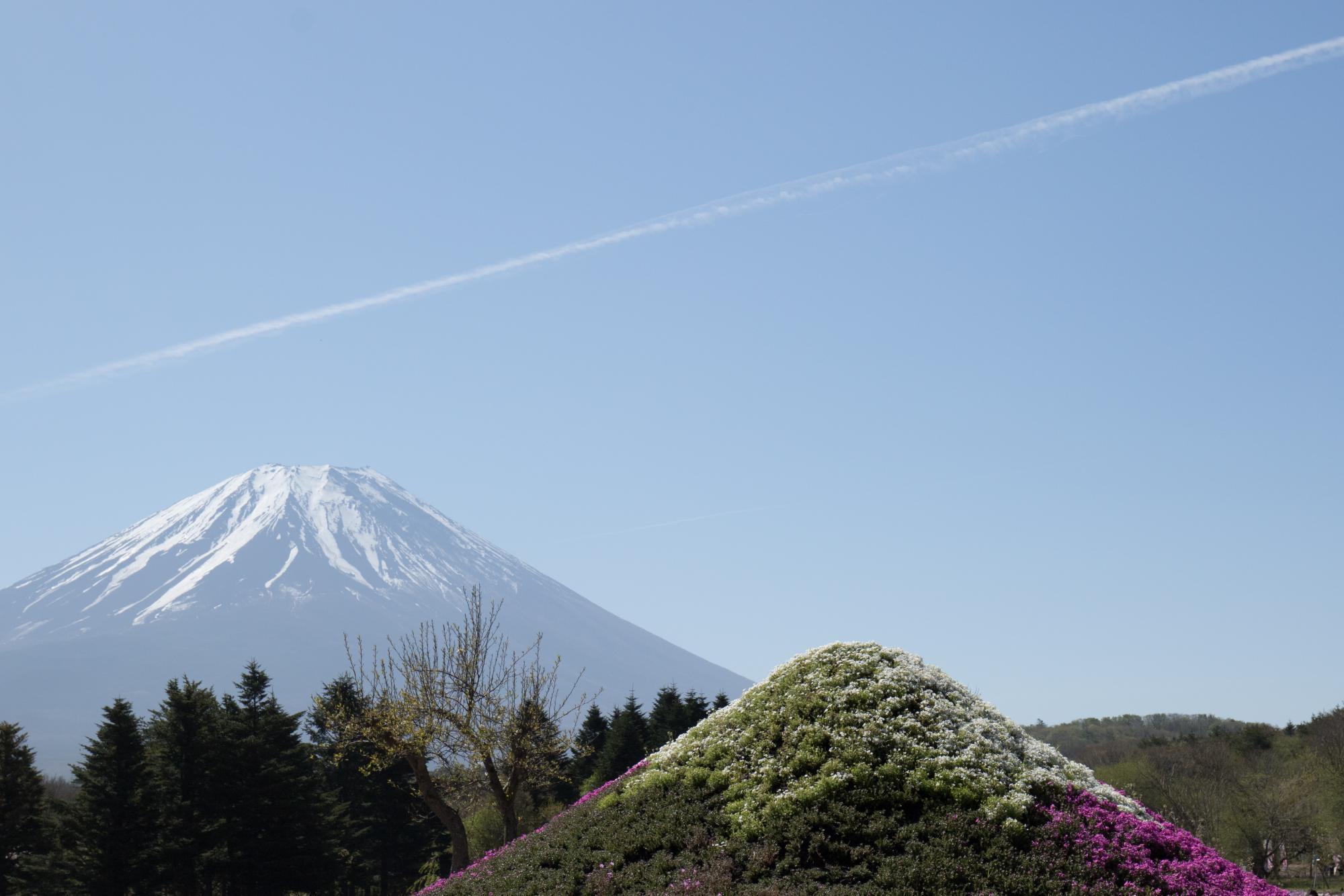 20170508-ミニ芝桜