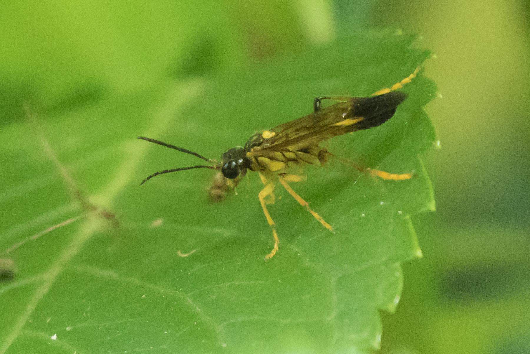 20170521-昆虫1
