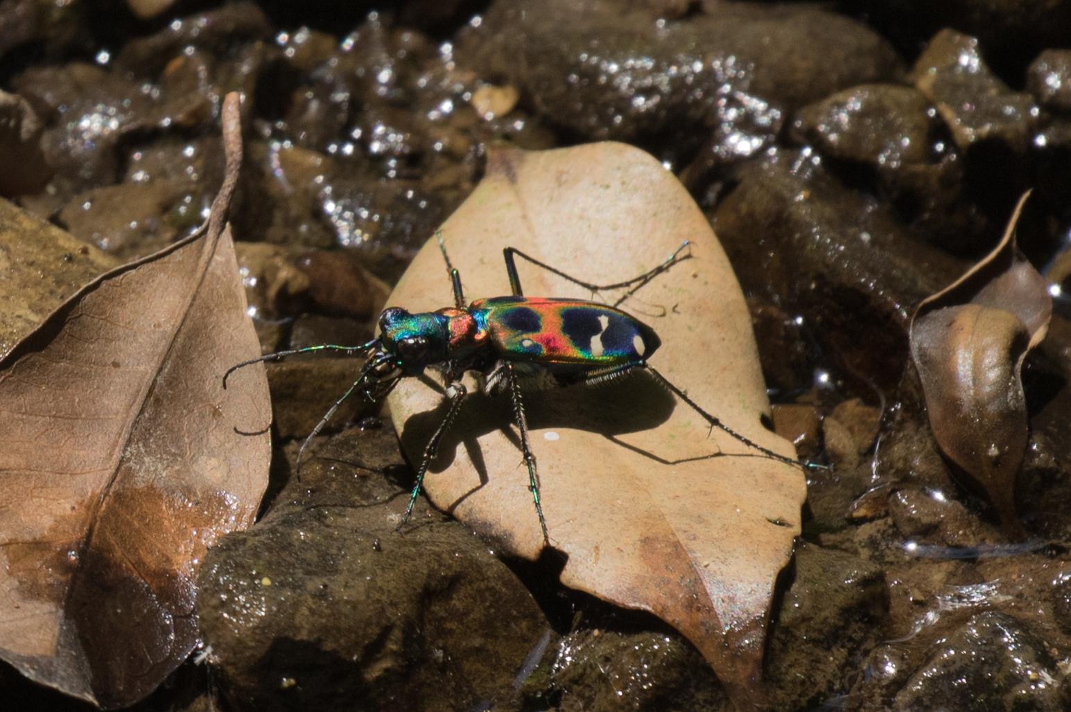 20170521-昆虫2