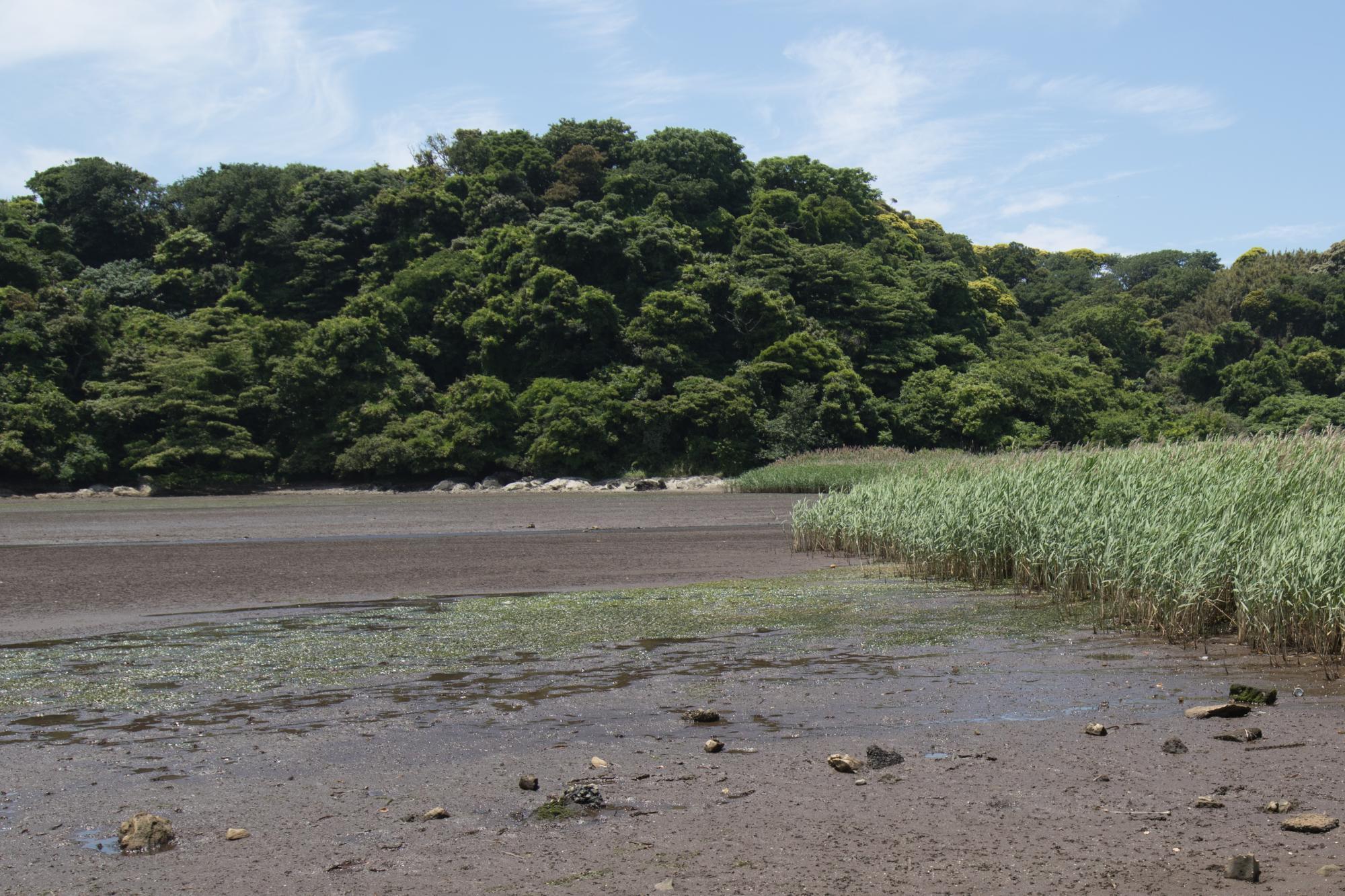 20170527-江奈湾2