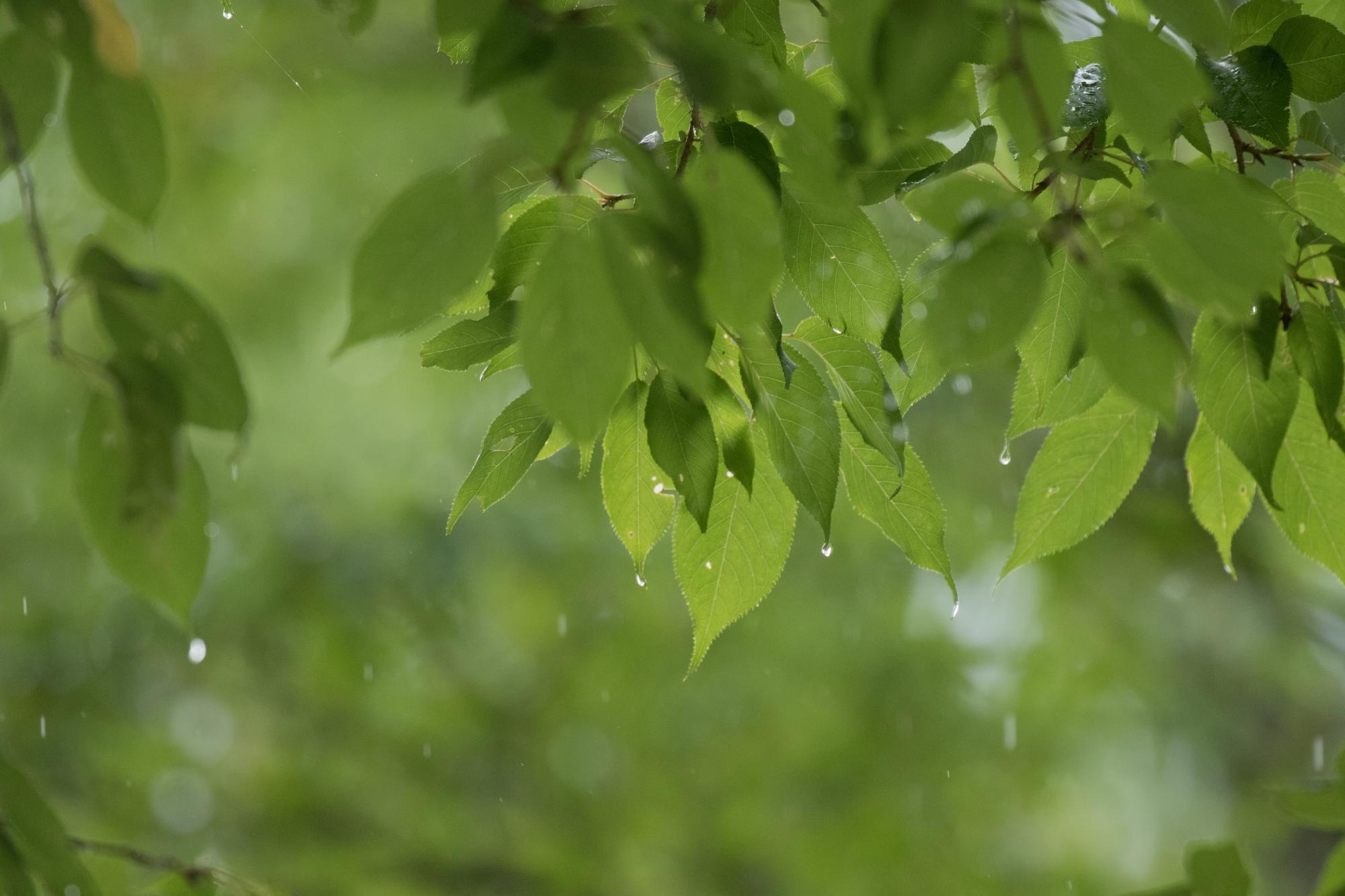 20170718-雨模様1